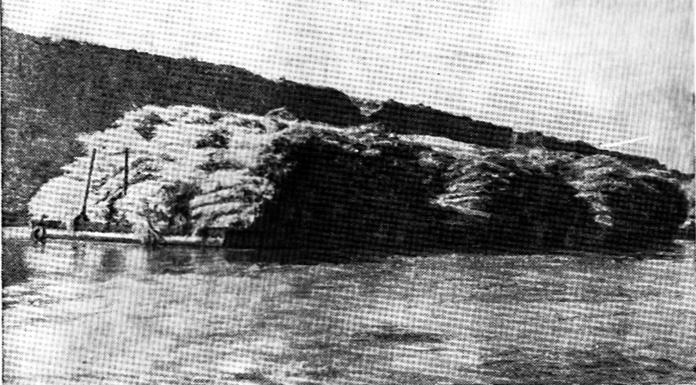 Рис. 2. Секционный состав с грузом камыша 360 т